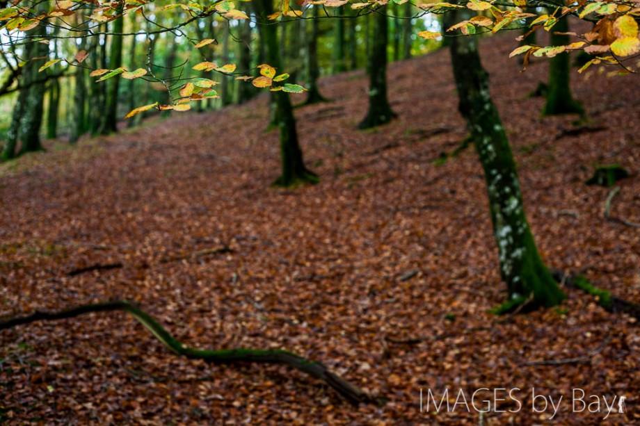 Autumn Danish Forest