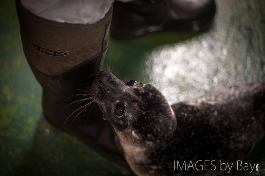 Image of Seal pup