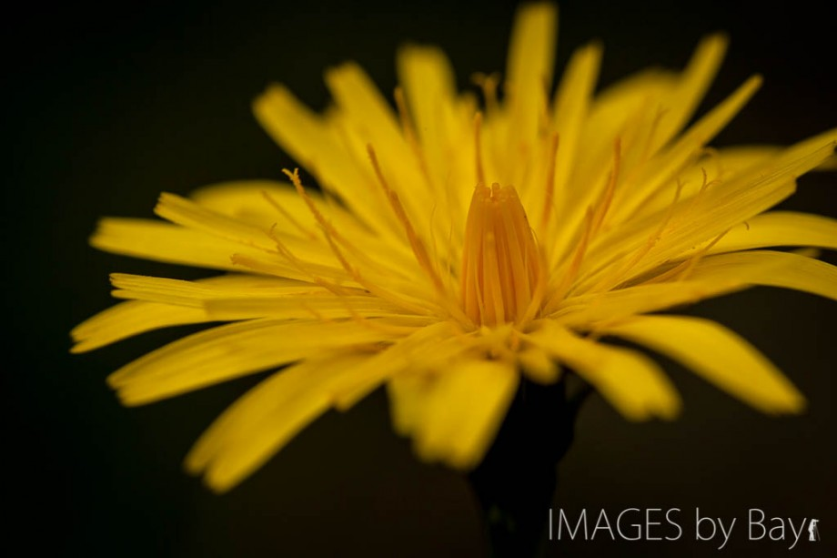 Image of Yellow Flower